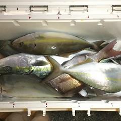 11月 8日(木) 午後便・ウタセ真鯛の写真その12