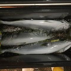 11月 10日(土) 午後便・ウタセ真鯛の写真その9