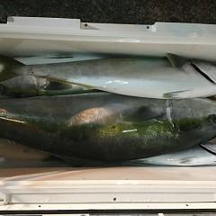 11月 10日(土) 午後便・ウタセ真鯛の写真その10