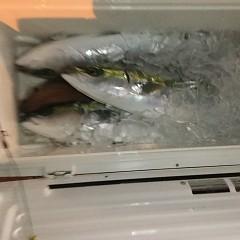 11月 10日(土) 午後便・ウタセ真鯛の写真その11