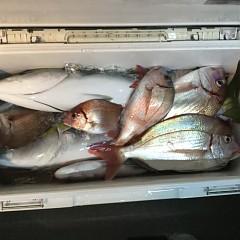 11月 11日(日) 午後便・ウタセ真鯛の写真その8