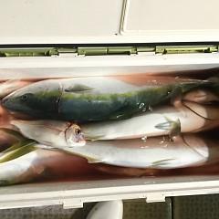 11月 11日(日) 午後便・ウタセ真鯛の写真その10
