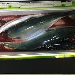 11月 11日(日) 午後便・ウタセ真鯛の写真その11