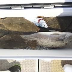 11月 17日(土) 午前便・ヒラメ釣りの写真その4