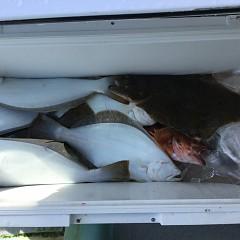 11月 17日(土) 午前便・ヒラメ釣りの写真その8