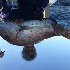 11月 17日(土) 午後便・ウタセ真鯛の写真その2