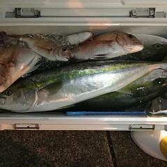 11月 17日(土) 午後便・ウタセ真鯛の写真その8