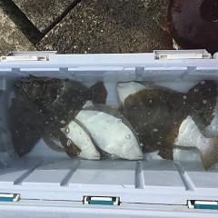 11月26日(月)午前便・ヒラメ釣りの写真その4
