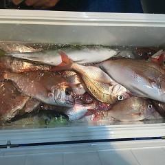 11月 27日(火) 午後便・ウタセ真鯛の写真その6