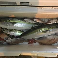 11月 27日(火) 午後便・ウタセ真鯛の写真その8