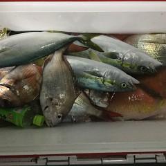 11月 27日(火) 午後便・ウタセ真鯛の写真その10