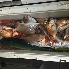11月 27日(火) 午後便・ウタセ真鯛の写真その11