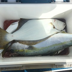 11月 30日(金) 午前便・ヒラメ釣りの写真その3