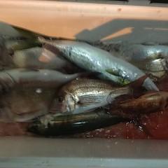 11月30日(金)午後便・ウタセ釣りの写真その2