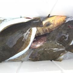 12月 2日(日) 午前便・ヒラメ釣り 午後便・ウタセ真鯛の写真その5