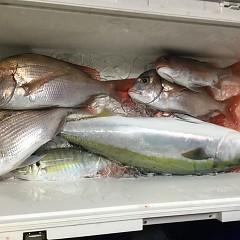 12月 3日(月) 午後便・ウタセ真鯛の写真その5