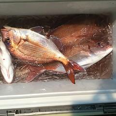 12月 3日(月) 午後便・ウタセ真鯛の写真その7
