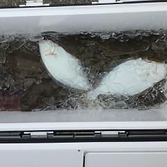 12月 7日 (金) 午前便・ヒラメ釣りの写真その1