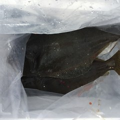 12月10日(月)午前・午後便・ヒラメ釣りの写真その6