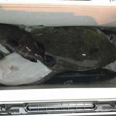 12月 13日(木) 午後便・ヒラメ釣りの写真その2