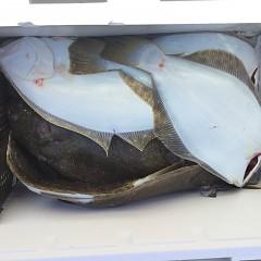 12月15日(土)午前・午後便・ヒラメ釣りの写真その2
