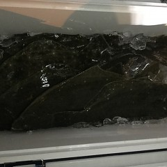 12月 19日(水) 午後便・ヒラメ釣りの写真その10
