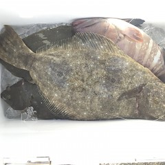 12月31日(月)午前便・ヒラメ釣りの写真その6