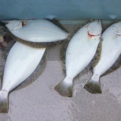 1月6日(日)午前便・ヒラメ釣りの写真その9