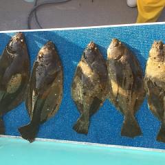 12月 8日(火) 1日便・泳がせ釣りの写真その6