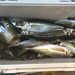 1月18日(金)午前便・ヒラメ釣り・午後便・アジ釣りの写真その5