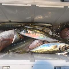 1月18日(金)午前便・ヒラメ釣り・午後便・アジ釣りの写真その6