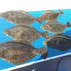 1月24日(木)午前便・ヒラメ釣り・午後便・アジ釣りの写真その1