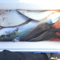 1月24日(木)午前便・ヒラメ釣り・午後便・アジ釣りの写真その3