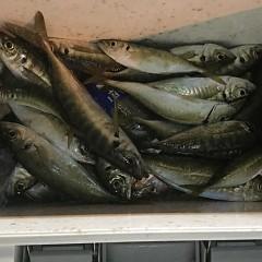 1月24日(木)午前便・ヒラメ釣り・午後便・アジ釣りの写真その5