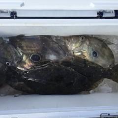 1月25日(金)午前便・ヒラメ釣り・午後便・アジ釣りの写真その2