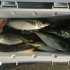 1月25日(金)午前便・ヒラメ釣り・午後便・アジ釣りの写真その6
