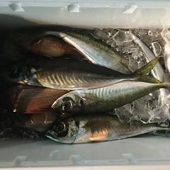 1月25日(金)午前便・ヒラメ釣り・午後便・アジ釣りの写真その8