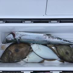1月26日(土)午前便・ヒラメ釣りの写真その4