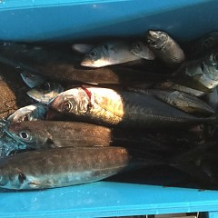1月 27日(日) 午後便・アジ釣りの写真その12