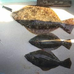 1月 30日(水) 午前便・ヒラメ釣りの写真その7