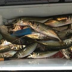 1月30日(水)午後便・アジ釣りの写真その3