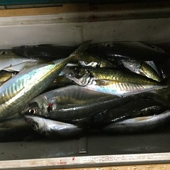 1月30日(水)午後便・アジ釣りの写真その4