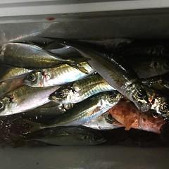 1月30日(水)午後便・アジ釣りの写真その5