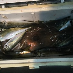 1月30日(水)午後便・アジ釣りの写真その6