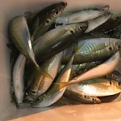 2月17日(日)午前便・ヒラメ釣り・午後便・アジ釣りの写真その6