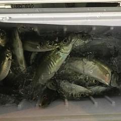 2月17日(日)午前便・ヒラメ釣り・午後便・アジ釣りの写真その8