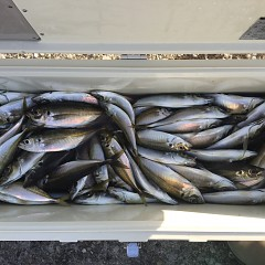 2月20日(水)午後便・アジ釣りの写真その1