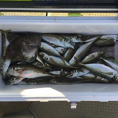 2月20日(水)午後便・アジ釣りの写真その2