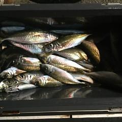 2月 27日(水) 午後便・アジ釣りの写真その8