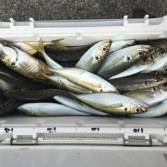 3月 29日(金) 午前便・アジ釣りの写真その1